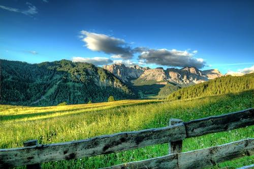 Photos gratuites de alpes, arbres, barrière, bois