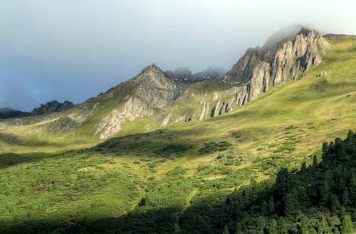 Fotobanka sbezplatnými fotkami na tému Alpy, borovice, hmla, hora