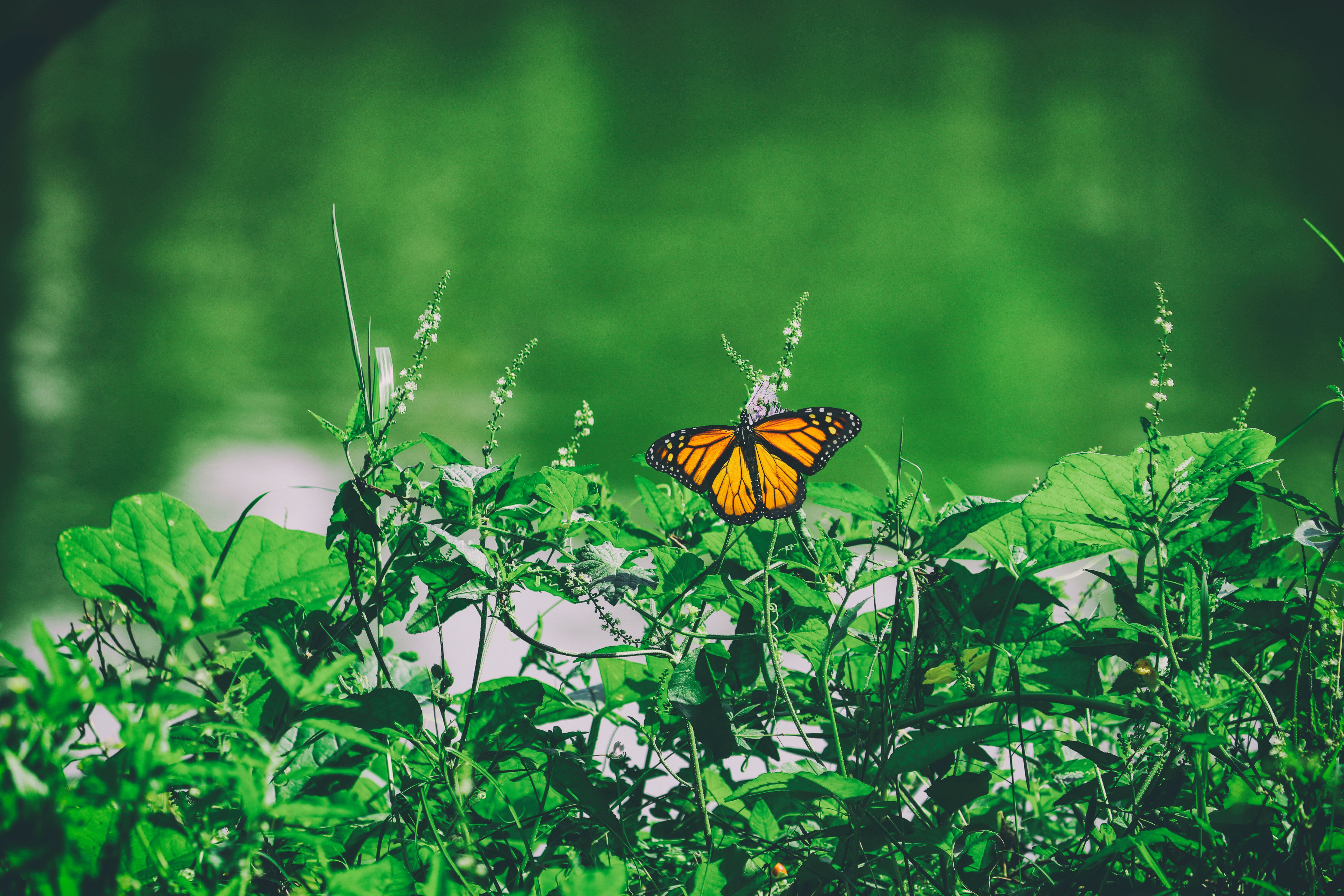 Green Leafed Plant and Butterfly