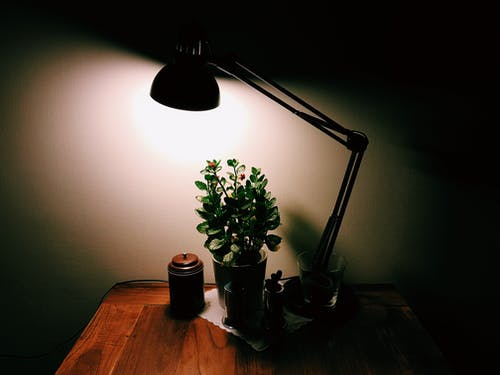 Turned-on Desk Lamp over Potted Plant