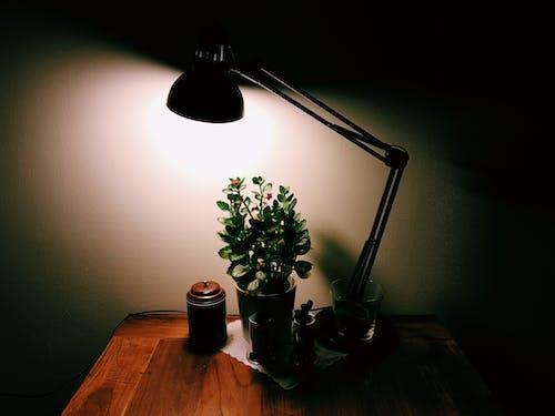 Включенная настольная лампа над горшечным растением