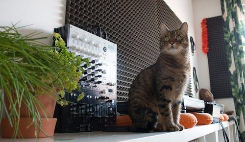 キティ, ネコ, 緑の無料の写真素材