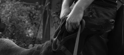 犬の無料の写真素材