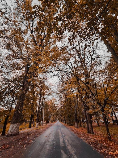Brown Trees Beside Road