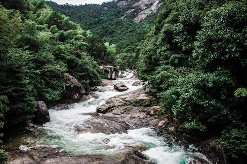 Безкоштовне стокове фото на тему «гора, дерево, ліс»