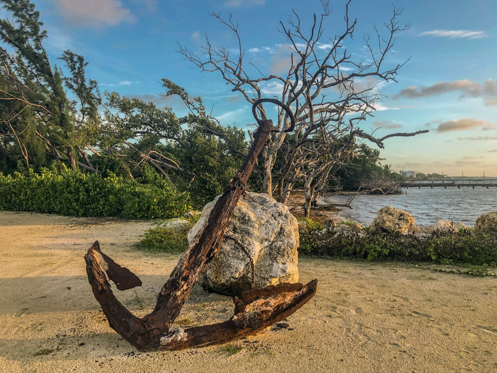 Brown Tree Trunk on Brown Sand Near Body of Water