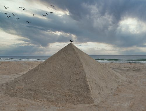 Free stock photo of beach, crow, egypt, north carolina