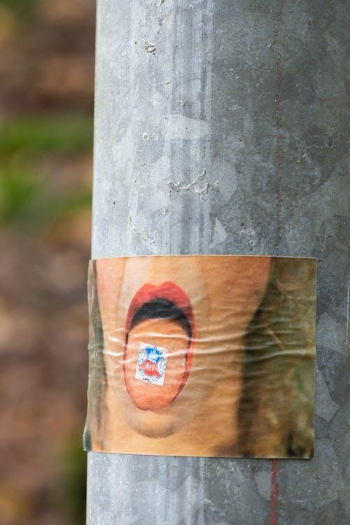 Ingyenes stockfotó fa, fatörzs, közelkép, nap témában