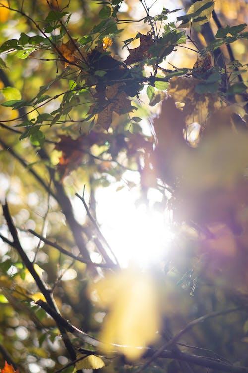 Free stock photo of autumn, background, beautiful, beauty