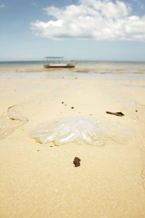 Free stock photo of barefoot, beach, jellyfish