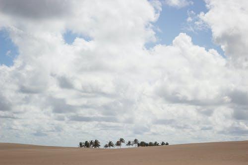 Immagine gratuita di albero dell'account, areia, cã © u, cielo