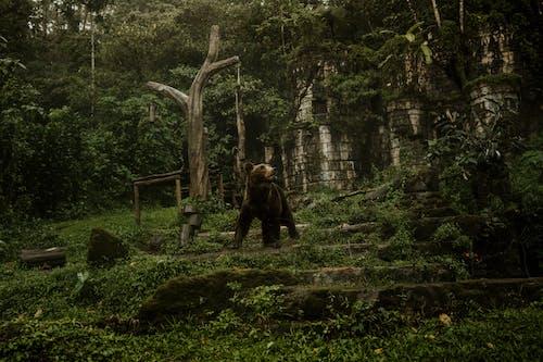 原本, 叢林, 向上看 的 免費圖庫相片