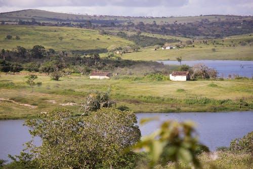 Ingyenes stockfotó casa de campo, fa, farm, fazenda témában