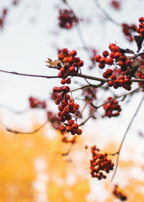 Ảnh lưu trữ miễn phí về atmosfera de outono, cây bụi, chi nhánh, giáng sinh