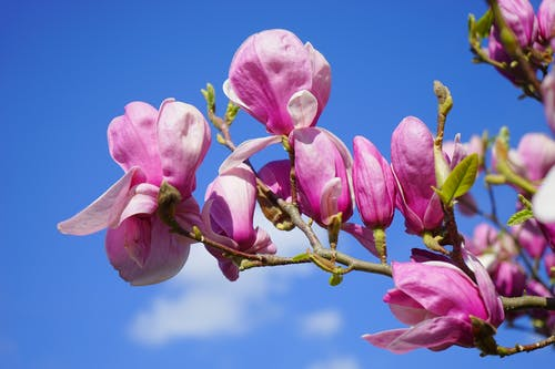 Pink Flower Under Blue Sky during Great Sunny Day