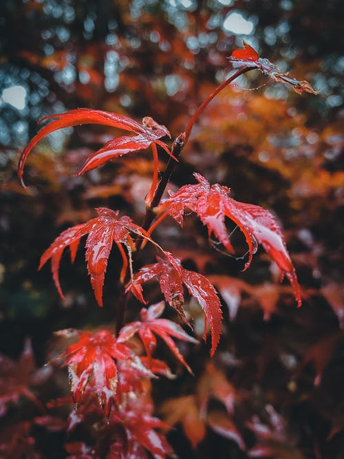 Colorful leaves with sharp ends growing on thin branch of tree in nature on blurred background in daylight in forest