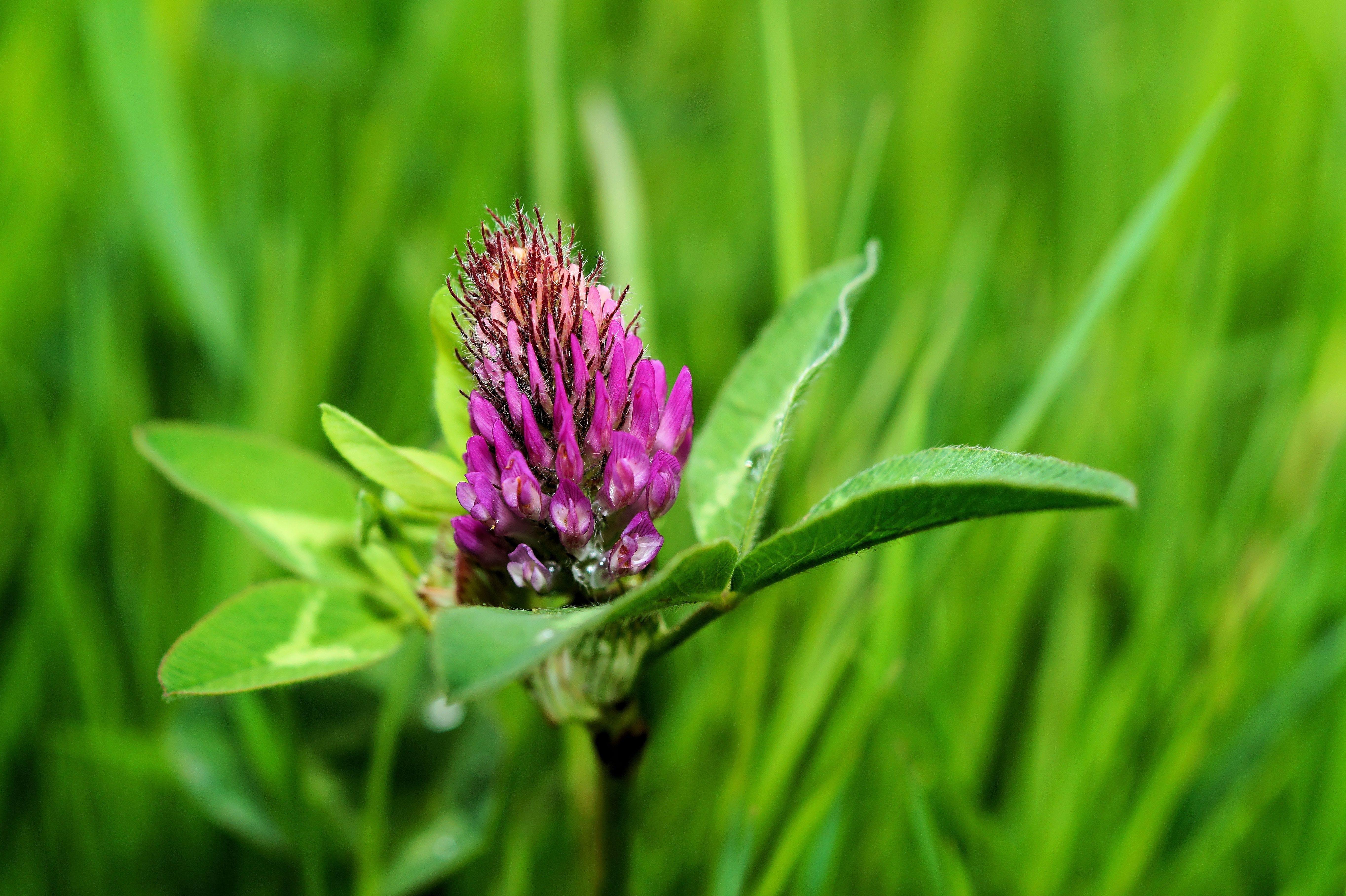 Purple Petal Flower on Green Grass