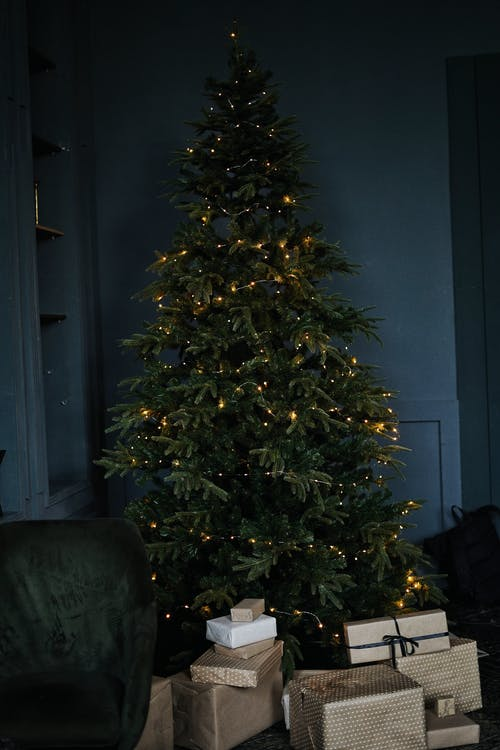 Giftboxes under tall festive green tree in room