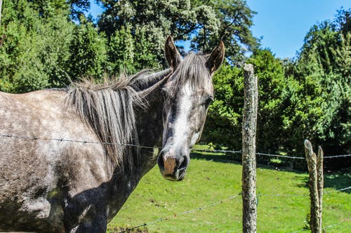 Kostenloses Stock Foto zu belleza natürlich, caballo, cochamo, entorno natürlich