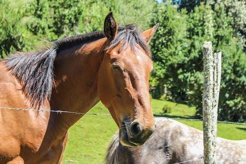 Kostenloses Stock Foto zu caballo, cochamo, fondo natürlich, naturaleza