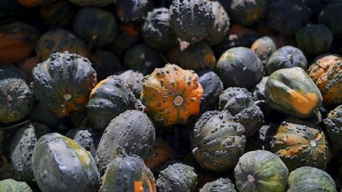 Orange and Black Round Fruits