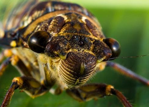 Macro Photo of Bug on Leaf