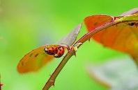insects, ladybug, bugs