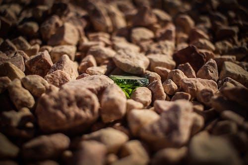 Green Leaf on Brown Stones