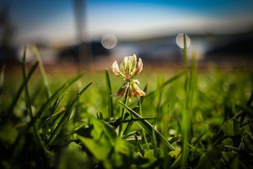 Yellow Flower on Green Grass Field