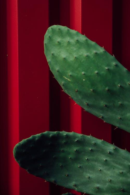 エキゾチック, サボテン, シャープの無料の写真素材