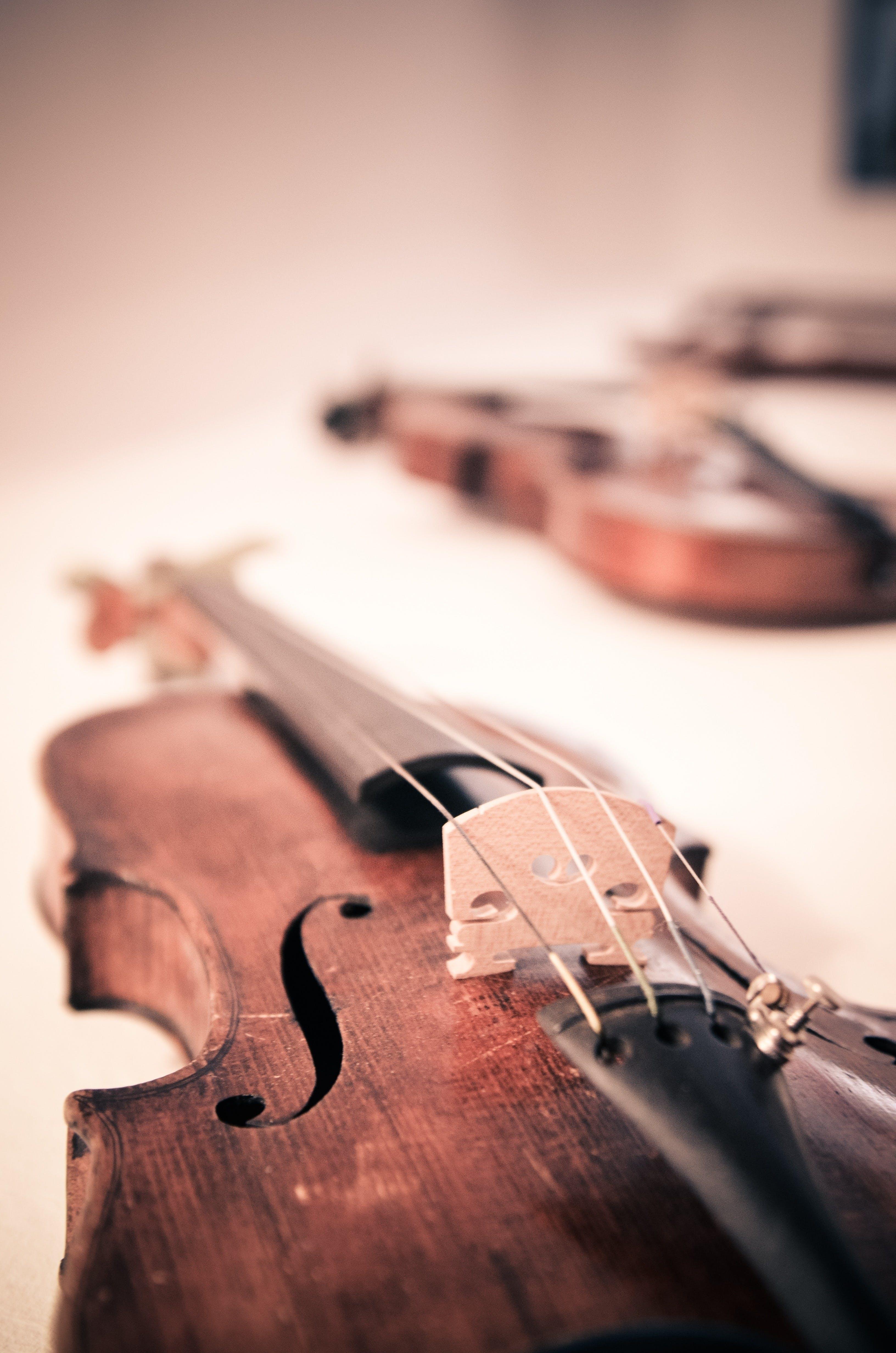 Ảnh lưu trữ miễn phí về nhạc cụ, nhạc cụ dây, vĩ mô, đàn vi ô lông