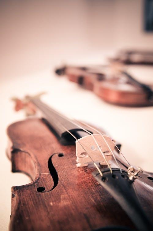 Безкоштовне стокове фото на тему «макрофотографія, музичний інструмент, скрипка, струнний інструмент»