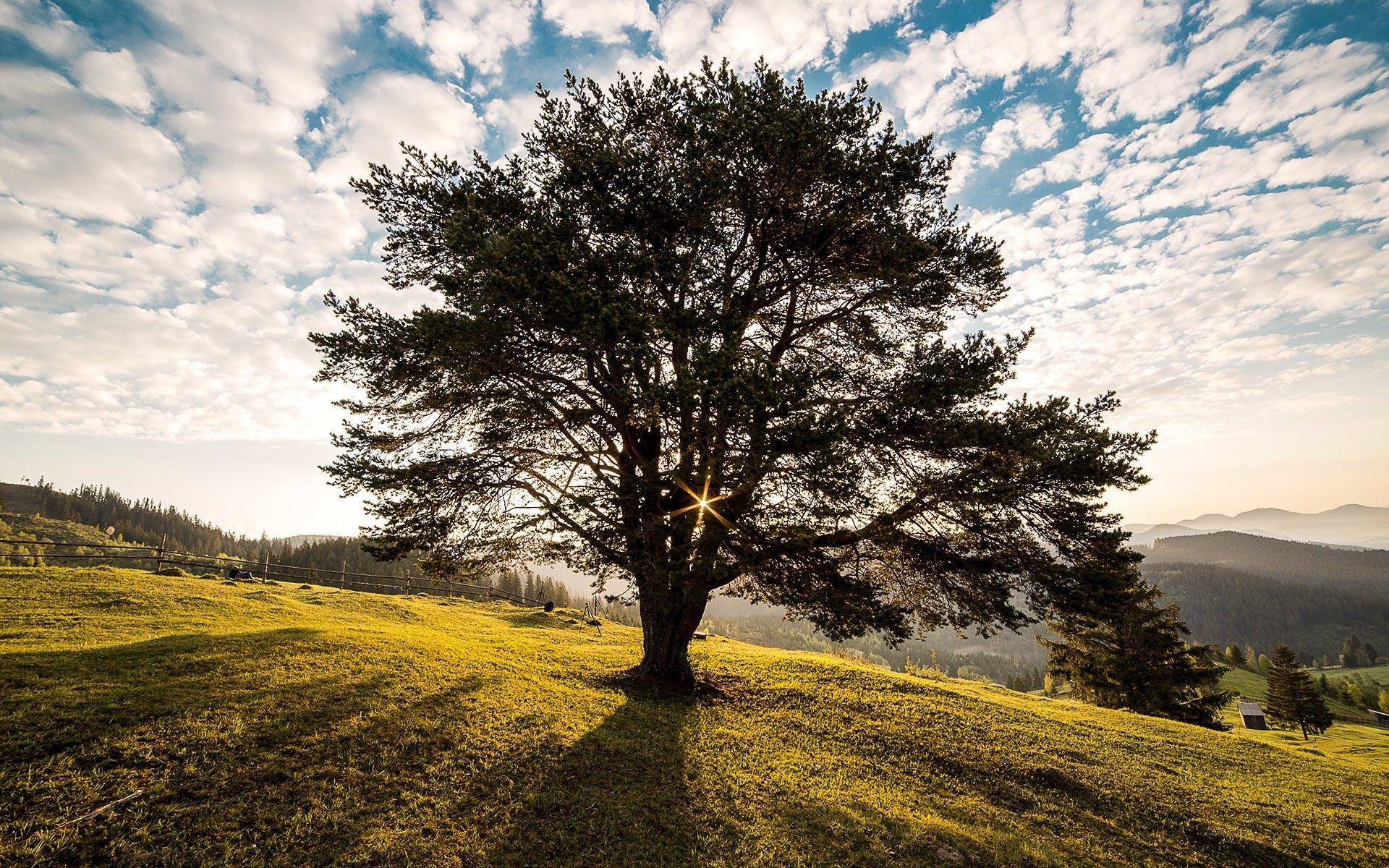 Foto profissional grátis de alvorecer, áreas, árvore, campulung
