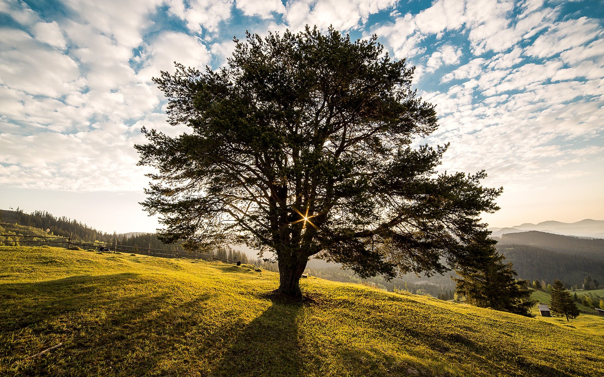 Image result for tree