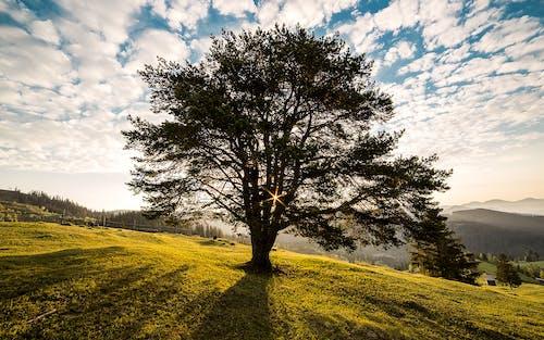 Photos gratuites de arbre, aube, campagne, campulung