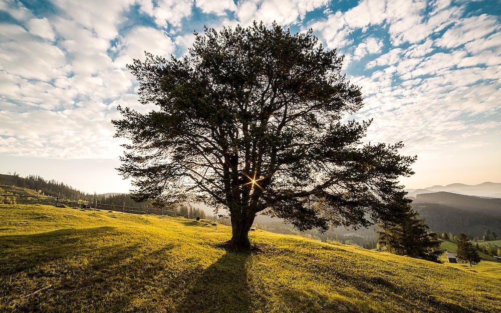 Tree @Pexels