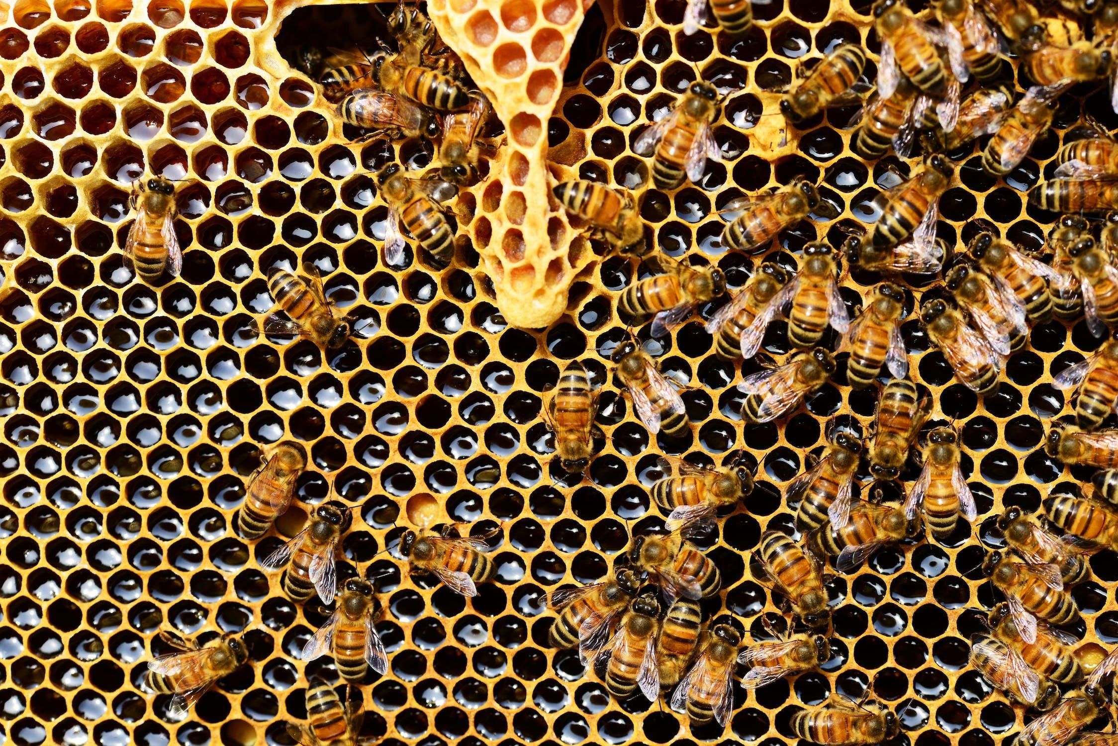 Plagas y exceso de tala destruye hábitat de abejas en Yucatán