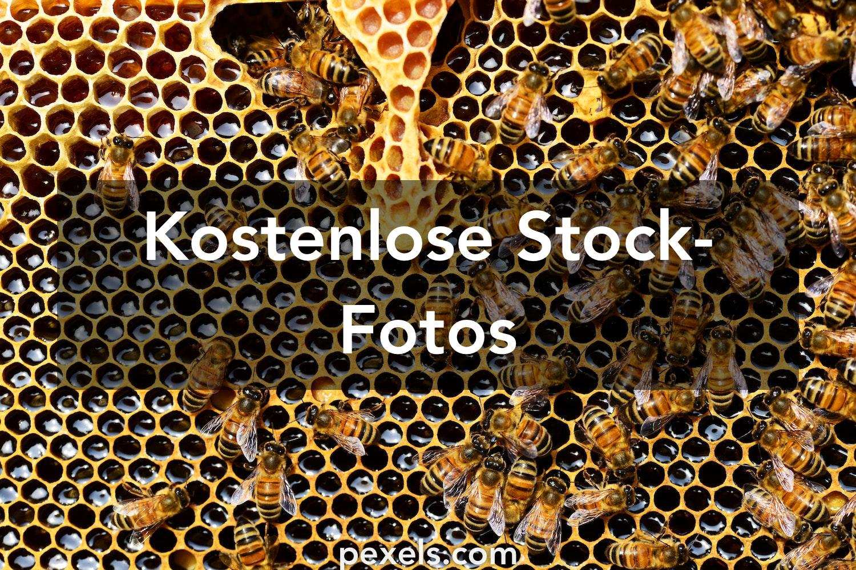28.28+ besten Bienen Fotos · 2800 % kostenloser Download · Pexels