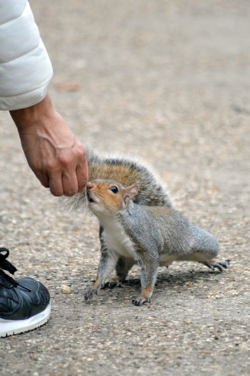 Brown and White Squirrel on Persons Hand