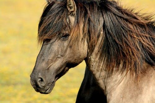 at, aygır, hayvanlar, vahşi içeren Ücretsiz stok fotoğraf