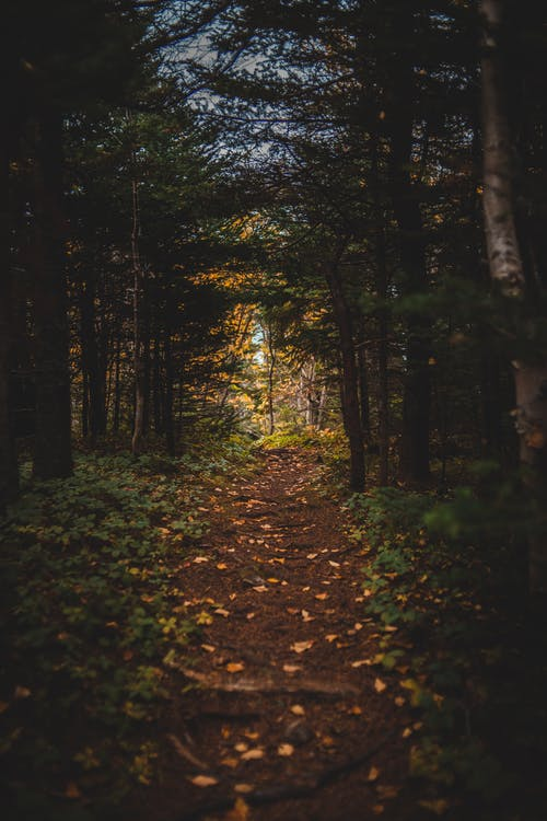 Fotos de stock gratuitas de al aire libre, amarillo, árbol