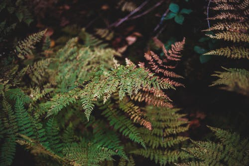 From above of green fern growing in forest with bushes in dim sunlight in summer