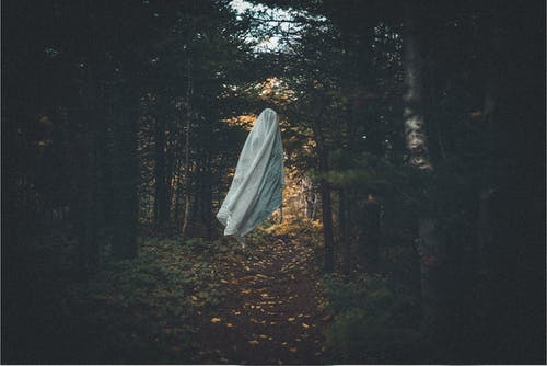 Scary ghost in dark grove with coniferous trees