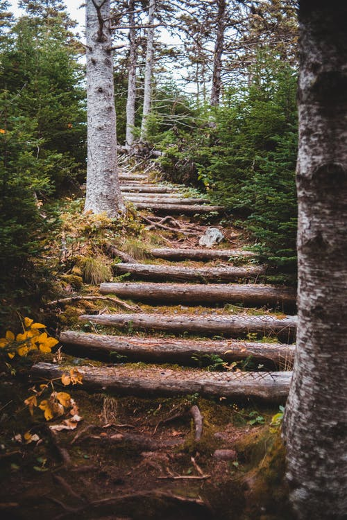 Weathered timber stairs among trees and bushes with lush green foliage in summer