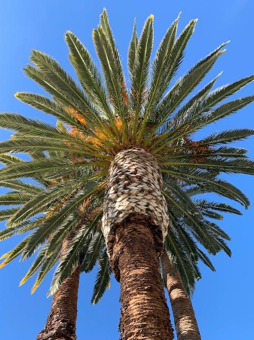Foto profissional grátis de alto, ao ar livre, árvore