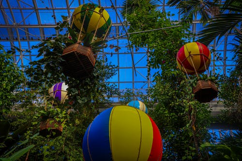 Free stock photo of forest nature, forest trees, hot air balloons, jungle