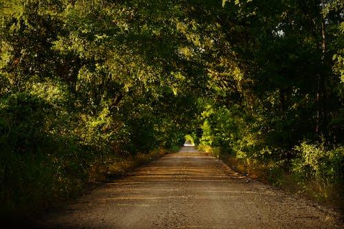 Foto profissional grátis de aconselhamento, ao ar livre, árvores