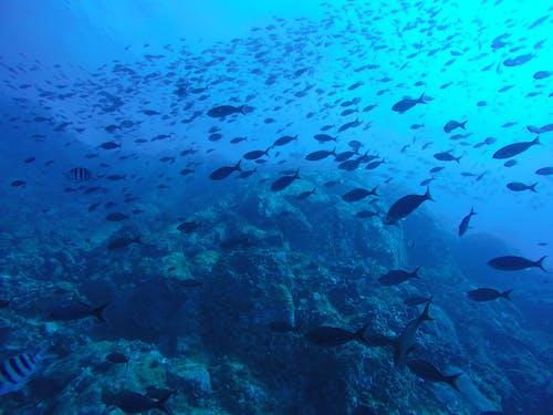 Schooling Fishes Underwater