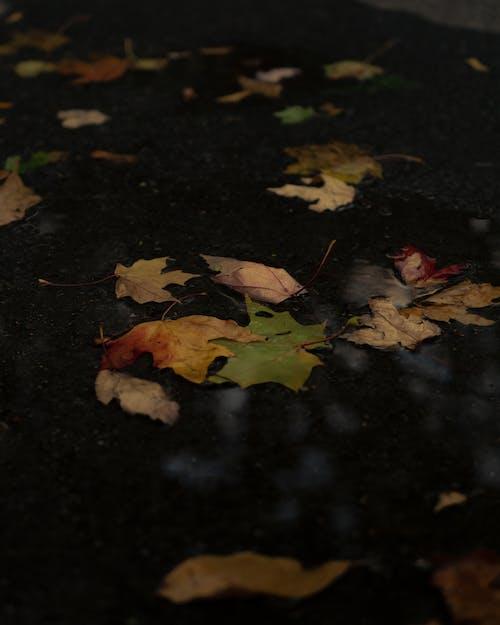 Dried Maple Leaves on Black Floor