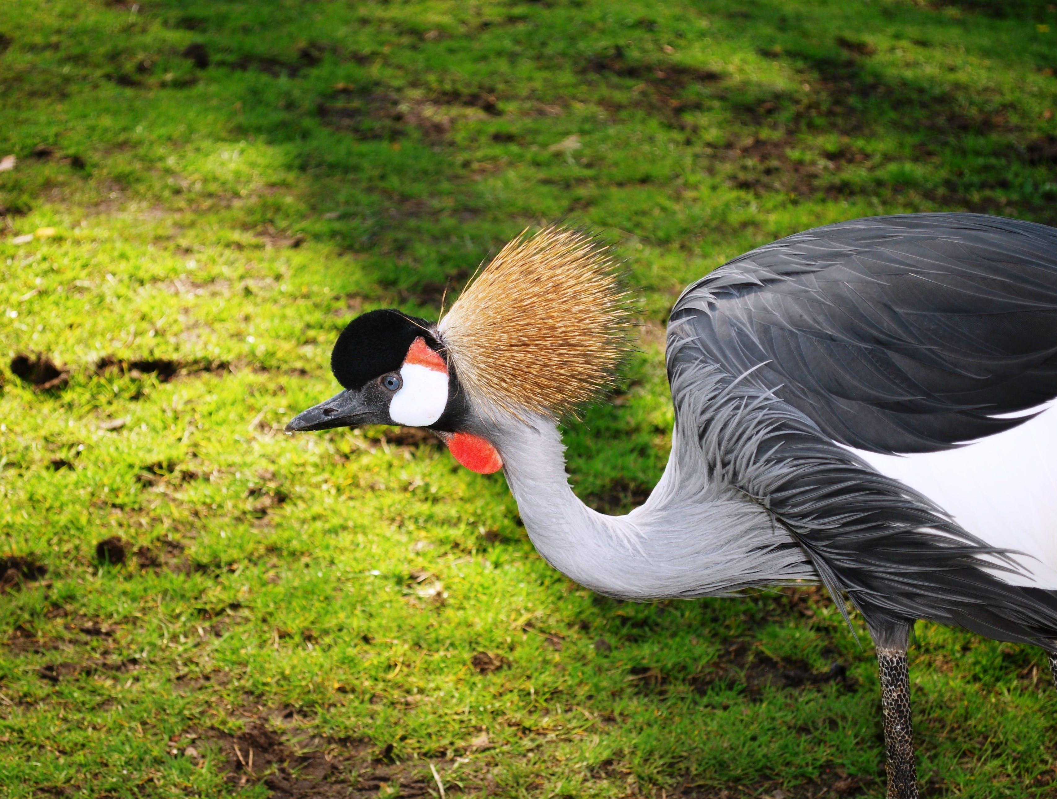 Black White and Gray Bird on Green Grass